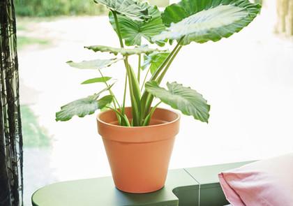 Een plant in de slaapkamer