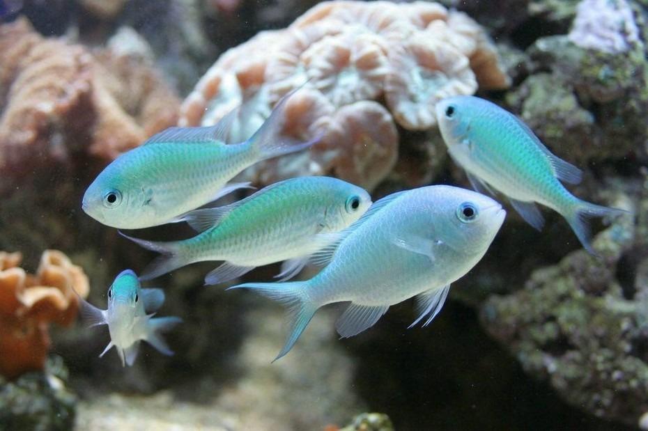 Blauw groene juffer